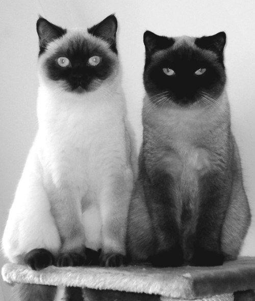 Handsome pair.
