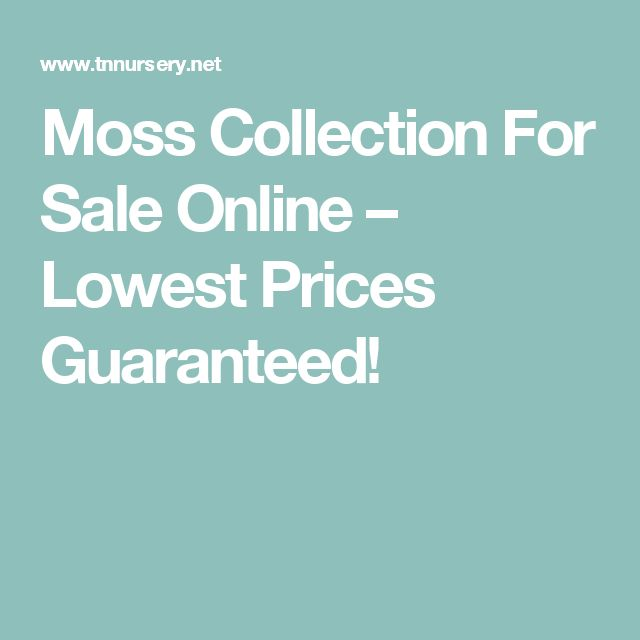Moss Collection For Sale Online – Lowest Prices Guaranteed!