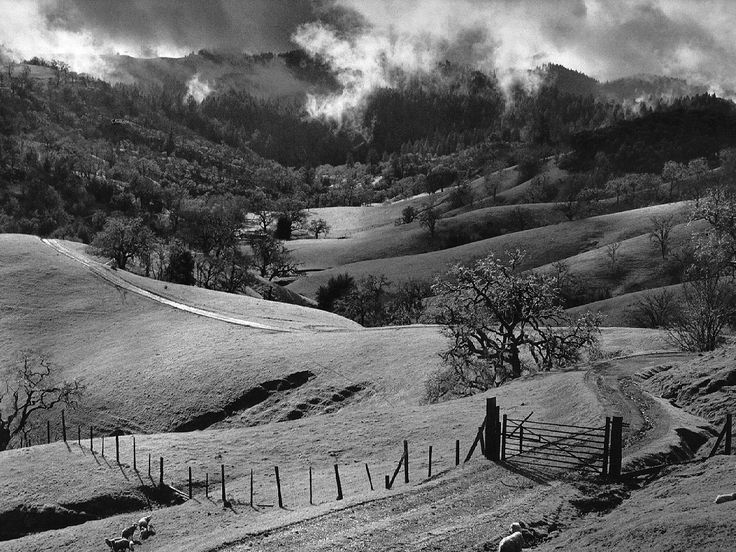 Ansel Adams also took photos of Marin County and West Marin. Most people know him for his Yosemite shots.