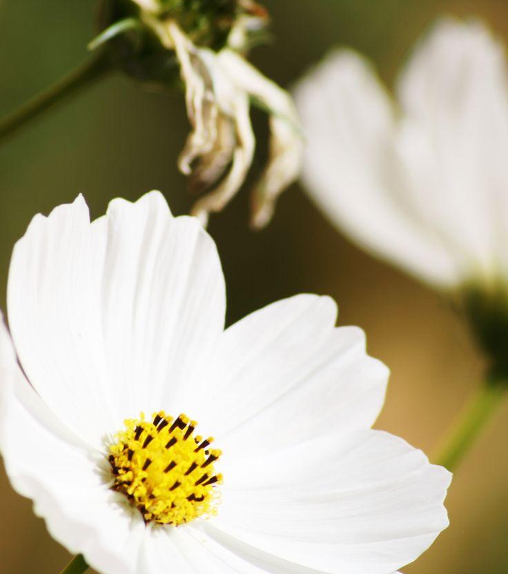 flowery things :)