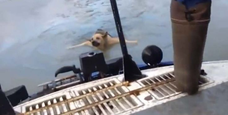 Toen twee mannen op de Russische rivier de Wolga voeren en in de verte iets in het ijskoude water zagen, besloten ze er direct heen te varen. Verbaasd waren ze dan ook toen ze een hond aantroffen die in grote nood was.