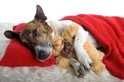Ways to alleviate your pet's upset stomach. I don't have a dog, but I might someday, and I still found this interesting.