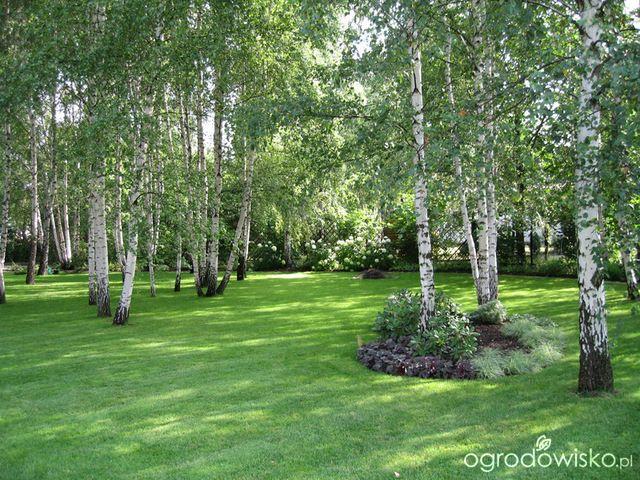 lesny ogrod