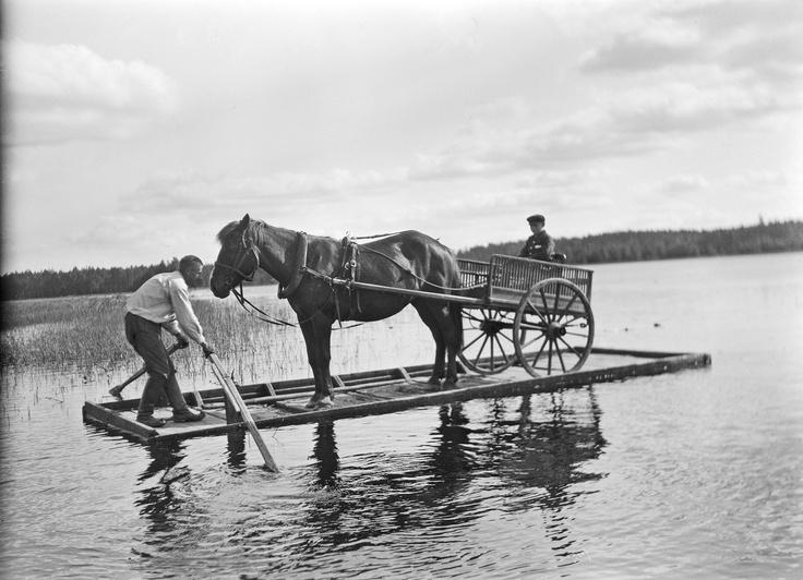 Finnish horse on raft - Finland