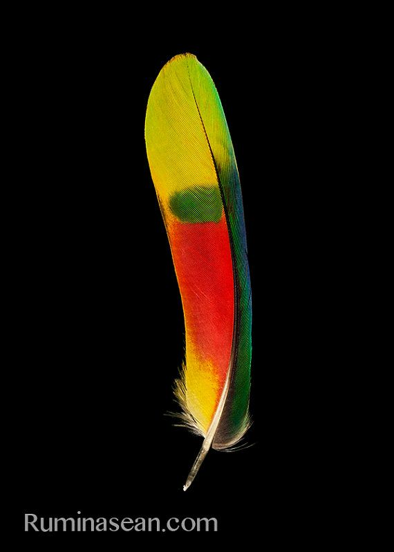 Blue Fronted Amazon Parrot Feather Portrait by SeanoEye on Etsy, $10.00