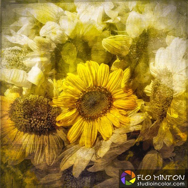 Sunflowers display. Shot with Lumix LX5. Post processed with Photoshop, Nik Software plugins, textures from French Kiss Textures.   #sunflowers #LumixLX5 #Nik #flowers #textures