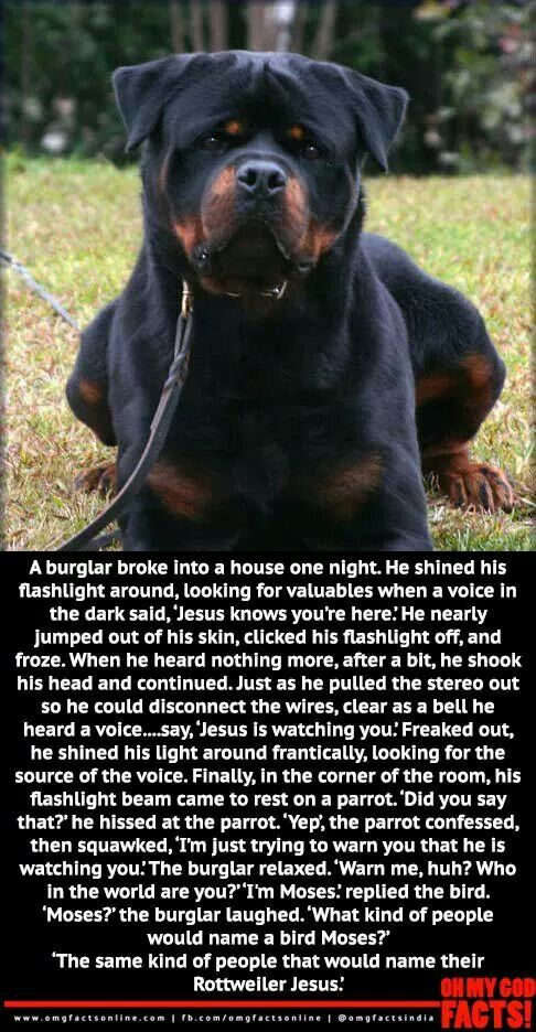 Joke about rottweiler named jesus