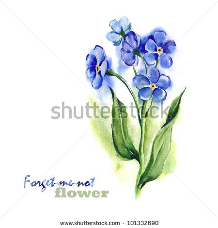 Watercolor -Forget-me-not- by Marina Grau, via ShutterStock
