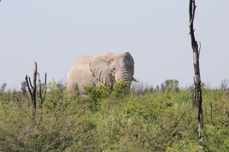 Denne gutten sto ved veien mellom Francistown og Maun i Botswana