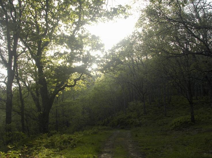 Otra magnífica foto del camino de la solana en el verano de 2012. Aquí te puedes refugiar del calor estival y dar un paseo maravilloso.