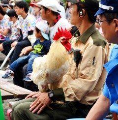 秋の全国交通安全運動に合わせて大阪市の天王寺動物園で幸運のニワトリマサヒロが大阪府警の一日高速道路交通警察隊長を務めました() もともと肉食獣の餌用に来園しイタチ駆除のおとり餌時代も運良く敵が現れず生き延びたという幸運のニワトリ その幸運にあやかったとか tags[大阪府]