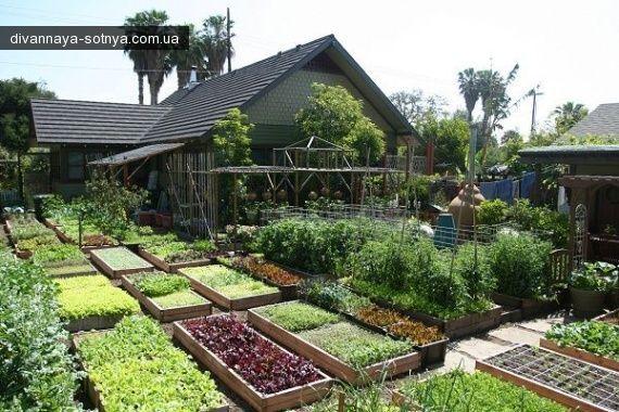 Можно ли выращивать много еды в городе? Urban Homestead — небольшая органическая ферма в Калифорнии, имеет всего 4 сотки и работают на ней отец и трое