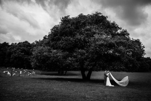 Credit: Nicole Bosch Fotografie - monochroom, boom (plant), landschap, dageraad, zwart en wit, zon, natuur