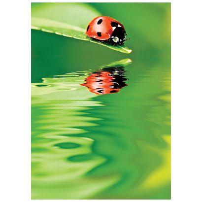 Ladybird #postcards
