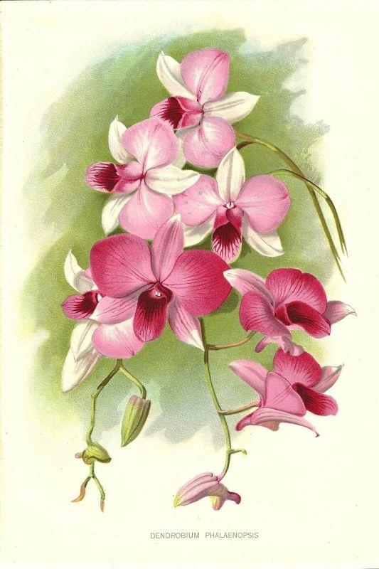 173 Best Arte Flores Orchid Images On Pinterest Orchids