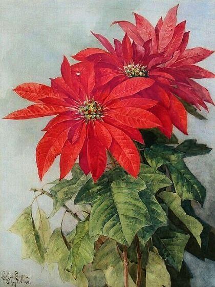 Paul de Longpre: Poinsettia, 1909
