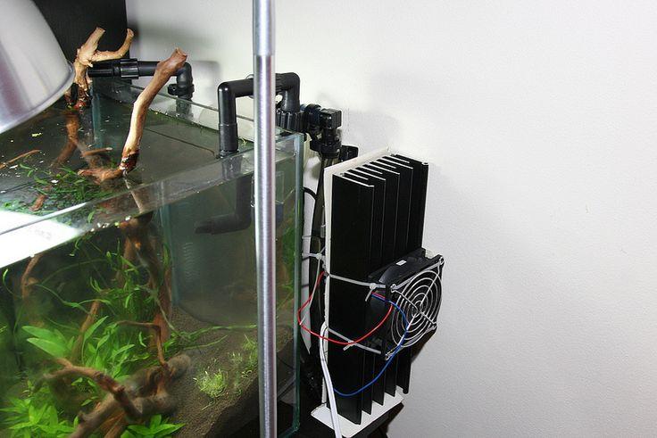 Diy chiller aquascape pinterest aquariums aquarium for Fish tank water cooler