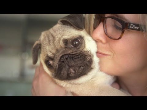 Facts That Prove Pugs Are The Best Breed Ever