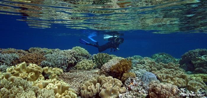 Diving Weda Bay Halmahera,Moluccas -  Indonesia Photo by: Patrick Van Moe