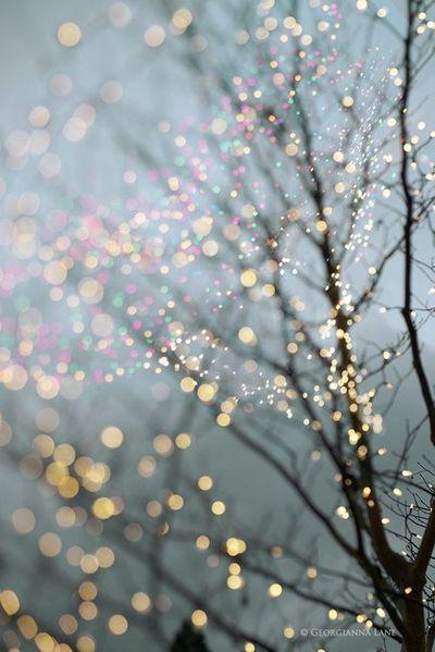 Le jeu de lumière créé dans cette photo donne une impression de légères paillettes disposées dans l'arbre | A complete life - Georgianna Lane