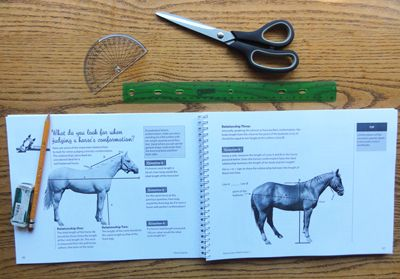 Looking for a great math resource for a horse crazy kid? https://www.horseloversmath.com/horsemathworkbooks
