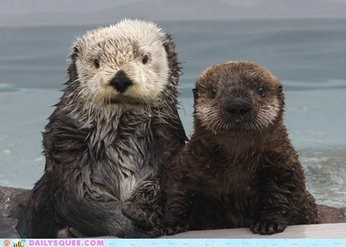 Squeedorable Swimmers