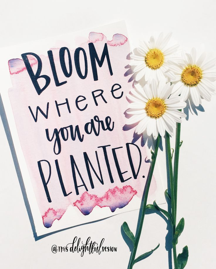 Bloom where you are planted | Inspirational Quote | Watercolor | Motivational | Modern Calligraphy | Hand Lettering | Ink | Wild flowers | This Delightful Design by Katie Clark | www.katieclarkk.com
