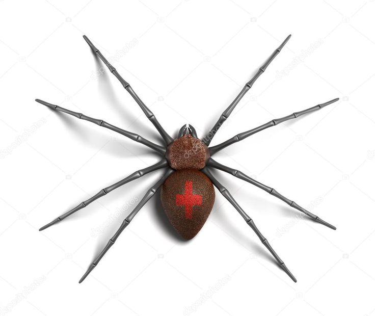 Černá vdova. izolované na bílém povrchu. 3D vykreslování — Stock obrázek #13495160