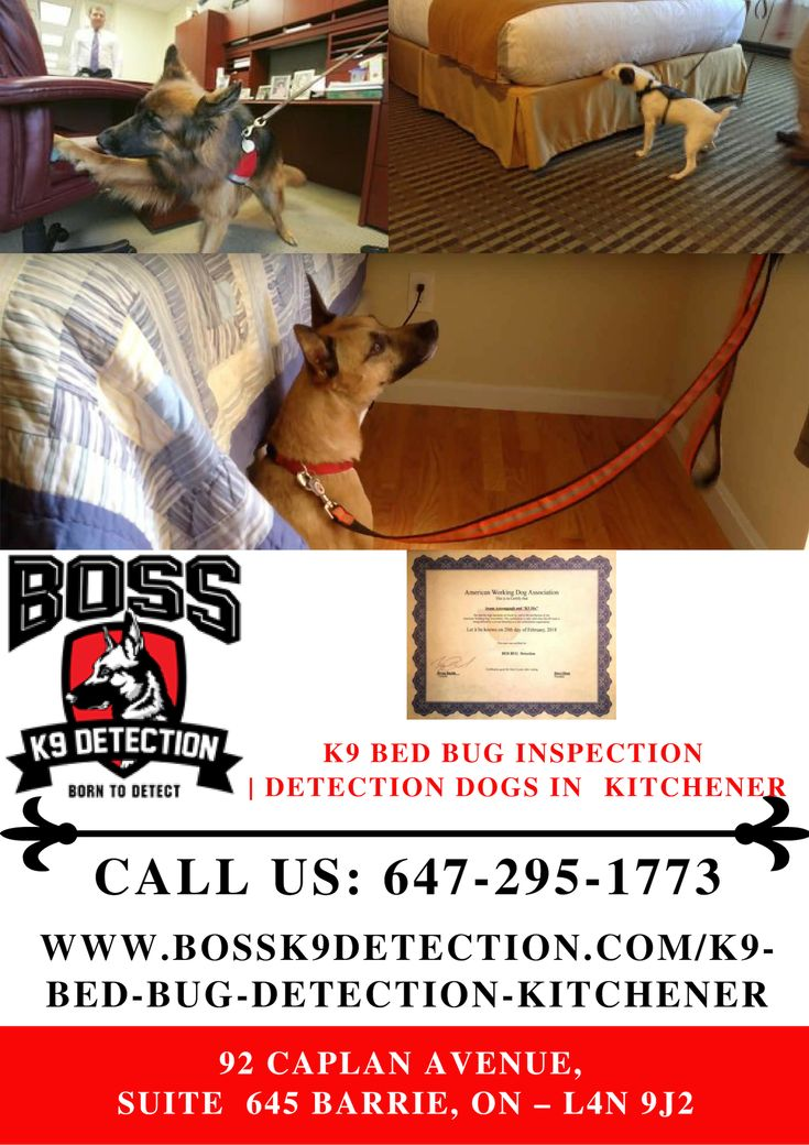 K9 Bed Bug Detection Kitchener Bed bugs, Detection dogs