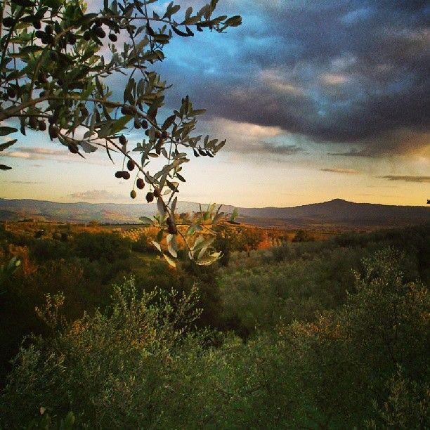 stunning sunset vanilla sky in tuscany maremma hills olive tree