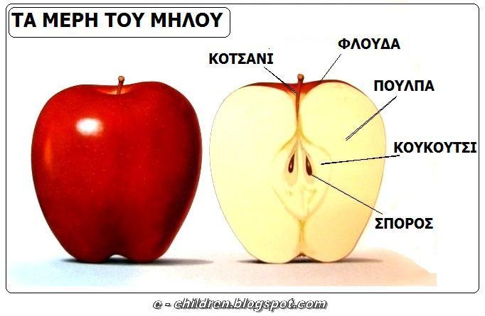 Τα φρούτα του φθινοπώρου 23/9/2013- 27/9/2013  Στόχοι: Τα παιδιά να αναγνωρίζουν και να ονομάζουν τα φρούτα του φθινοπώρου. Μαθαίνουμε παροιμίες και αινίγματα για τα φρούτα του φθινοπώρου. Να...