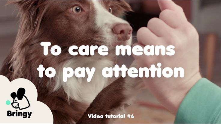 To care means to pay attention - lifehack #6 by Bringy