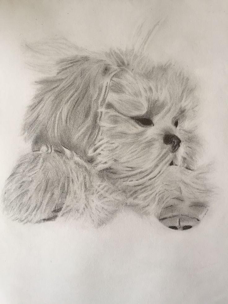 Wee fluffy dog- Roxy