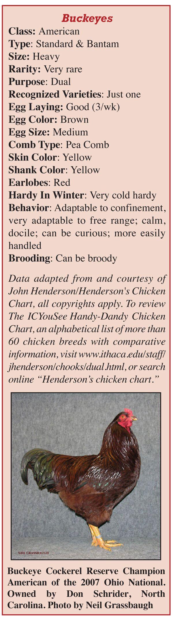 89 best chicken breeds images on pinterest breeds of chickens buckeye chickens nvjuhfo Gallery