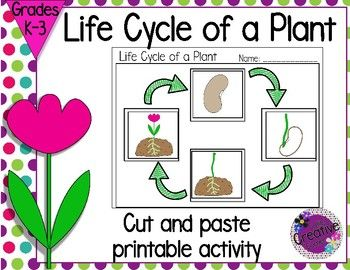 Life Cycle of a Plant is a cut and paste activity great for science centers or as a extension to your plant unit. This product includes: ❀ Cut and paste activity in color ❀ Cut and paste activity in black & white ❀ Directions with sample of finished product ❀ Writing option included Also Available Life Cycle of a Pumpkin ❀❀❀❀❀❀❀❀❀❀❀❀❀❀❀❀❀❀❀❀❀❀❀❀❀❀❀❀❀❀❀❀❀❀❀❀❀❀❀❀...