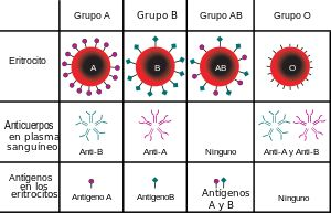 Grupo sanguíneo - Wikipedia, la enciclopedia libre
