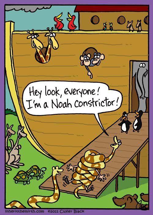 Noah constrictor