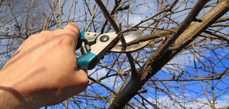 Ønsker du en god avling neste år, bør de kjære trærne som gir deg skygge hele sommeren få litt ekstra oppmerksomhet nå.