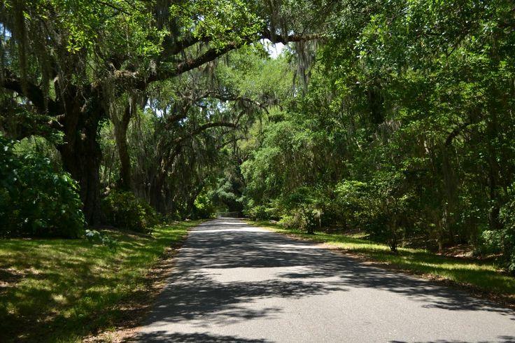 Magnolia Plantation and Gardens, Charleston, SC (Плантация Магнолия, Чарльстон, Южная Каролина)