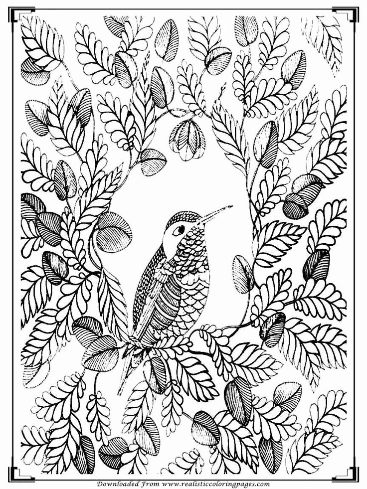 21 Bird Coloring Book for Adults in 2020 Bird coloring