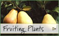 Northern Pecan-Burnt Ridge Nursery in Washington State sells two varieties: Kanza & Pawnee - they will pollinate each other, as well as Colby.