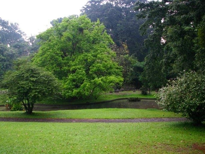 Kebun Raya Bogor Luas