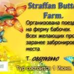 Лимерик организовывает поездку на ферму бабочек 1 июня