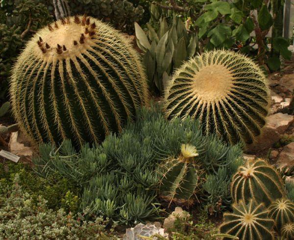 Sharp+cactus+needles+aren't+a+problem+when+you+repot+the+better+way!