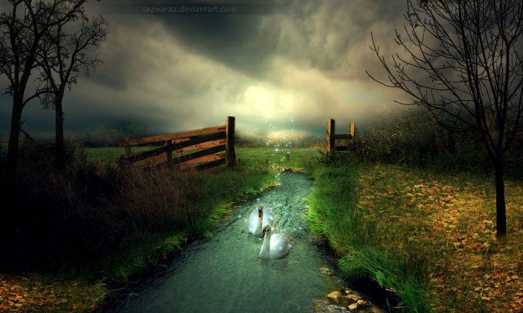 mystical backgrounds swans pinterest beauty swans