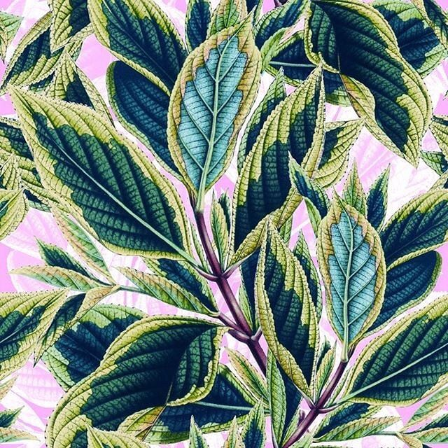 Tropical Leaves Pattern @patternbank #patternbank #tropical #tropicalleaves #botanical #green #leaves #tropicalprint #trendy #trend #fashion #print #seamlesspattern #fashionpost #wallart #leaf #textile #textiledesign #patterndesign #pink #design #graphic #exotic #forest #tropicalgarden #tropicalpattern #floralprint #summer #summertrends IG: @cazzabel