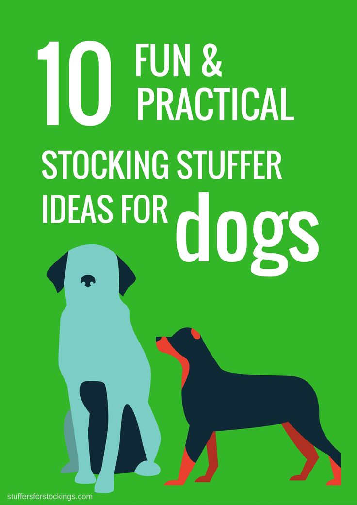 Dogs Love Christmas Too! Make sure they join in the fun. Click through for 10 dog stocking stuffer ideas for a fun filled and practical Christmas stocking.