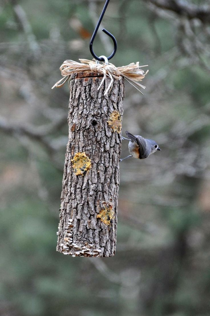 75 best birds feeding diy projects images on pinterest for the