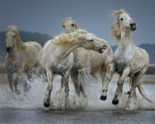 Best 25+ Wild horses quotes ideas on Pinterest | Wild ... - photo#20