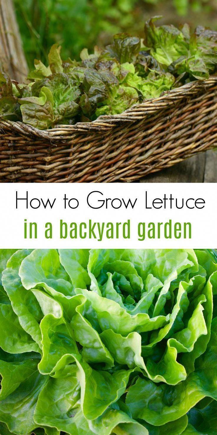 10 Astounding Cool Ideas Vertical Garden Ideas Kids Backyard